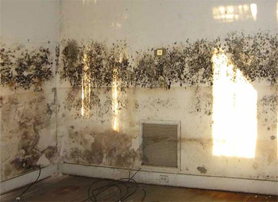 Причины появления грибка на стенах и как от него избавиться