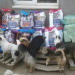 Питомник для кошек и собак просит помощи